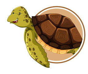 Turtle on circle template