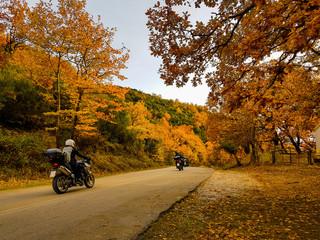 motorbikes on the road in autumn colors oak trees in Tzoumerka Arta Greece Wall mural