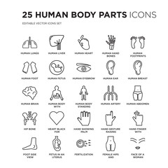 Set of 25 Human Body Parts linear icons such as Lungs, Liver, Heart, hand bones, footprints, vector illustration of trendy icon pack. Line icons with thin line stroke.
