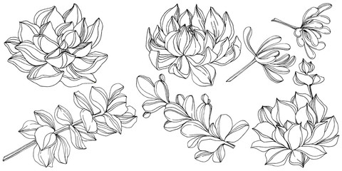 Vector Succulent floral botanical flower. Black and white engraved ink art. Isolated succulents illustration element.