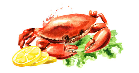 Red cooked crab with lemon, seafood, Watercolor hand drawn illustration isolated on white background