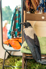 the crow in front of the mirror