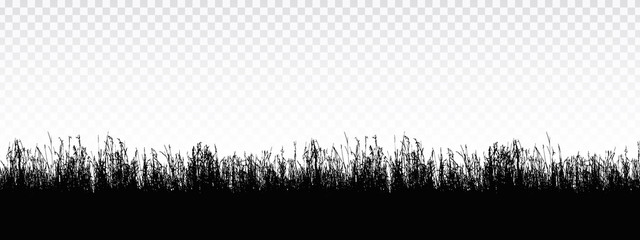 Seamless realistic illustration of a grass stalk or lawn, isolated on a transparent background, vector