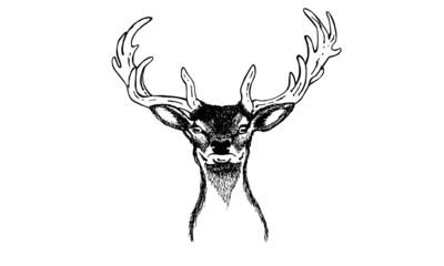 Hirschkopf |  Deer