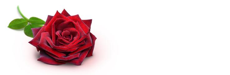 Blumen 958