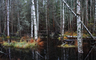 Flooding in the forest