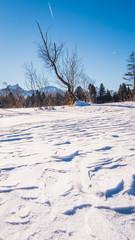 Lake in winter in Allgaeu Germany Hopfen am See