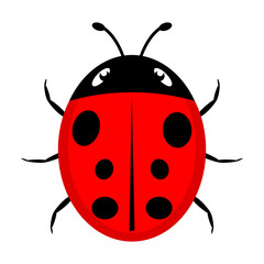 A beautiful simple design of a red ladybird