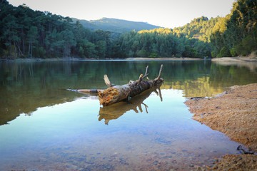 Old tree trunk fallen in a lake surrounded by trees on a mountain.