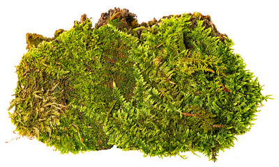green moss isolated on a white background