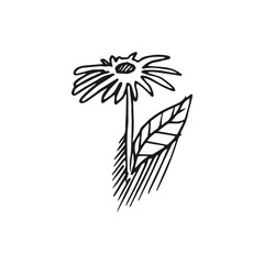 flower vector doodle sketch isolated on white background