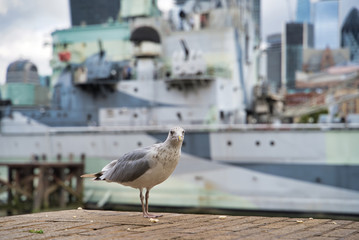 A seagull in the center of the city, against the background of the military cruiser, London, England