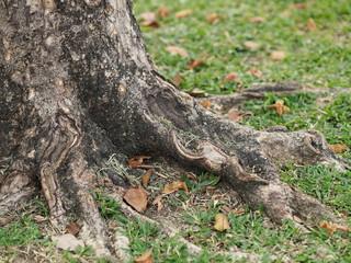 Trunk Big tree Bark rough texture