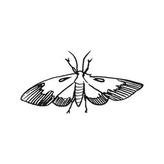 hawk moth vector doodle sketch isolated on white background