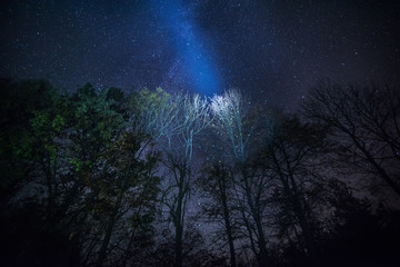 Millions of stars above the forest. Starry night sky in the forest.