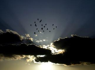 Birds fly through the clouds over the Jordanian capital Amman.