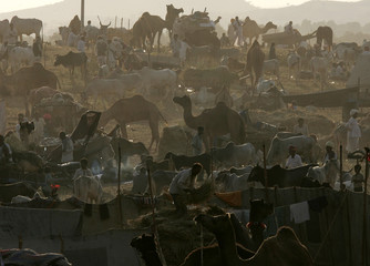 Camel herders assemble to do business one day before the start of the annual camel fair in Pushkar.