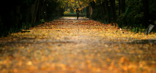 Romanian man walks under an umbrella on autumn morning in Bucharest.