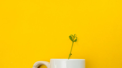 Wall Mural - Leaves nature small green and cup coffee  copy space