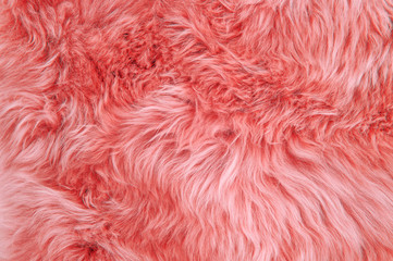 Coral sheepskin rug background sheep fur Wool texture