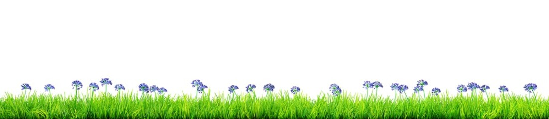 blue spring flowers and grass isolated 3D illustration