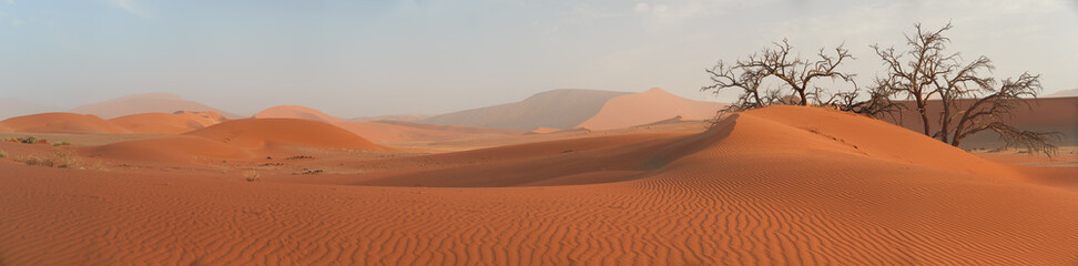 Picturesque Namib desert landscape, panoramic scene of huge red dunes  against blue sky near famous Deadvlei. Typical desert environment, wildlife photography in Namib Naukluft National Park, Namibia.