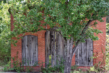 Old Brick Building Behind Tree