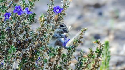Mouse eating flower