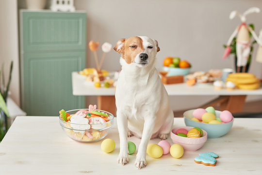 Easter greeting card with gingerbread cookies and eggs. Easter Postcard Template. Cookies in shape of eggs and bunny. Happy Easter holiday concept, easter dog with gingerbread cookies and eggs