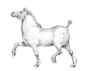 Thick funny horse.  Pencil drawing.