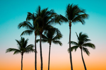 Brightly colored tropical background of palm tree silhouettes against sunset sky gradations