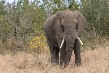 Garden Poster Elephant Elefant 61