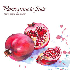 Red pomegranate fruits with watercolor splash. Original hand drawn illustration on white background.