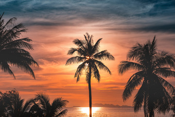 Silhouette coconut palm trees on beach at sunset