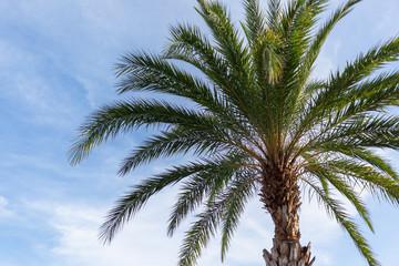 Close up palm on blue sky background