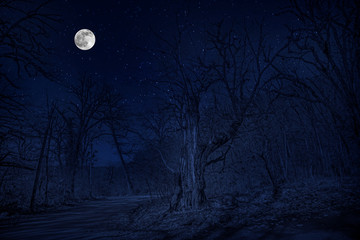 forest in silhouette with starry night sky and full moon ,Halloween background. Spooky forest with full moon