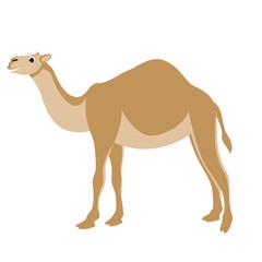 cartoon camel ,vector illustration ,flat style,profile