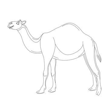 cartoon camel ,vector illustration , lining draw,profile side