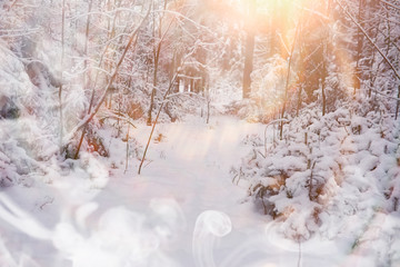 Winter landscape. Forest under the snow. Winter in the park.