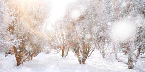 Winter Park. Landscape in snowy weather. January.