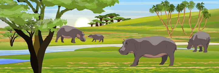 A herd of hippos in the African savannah. Wildlife of Africa. Realistic vector landscape with animals and plants