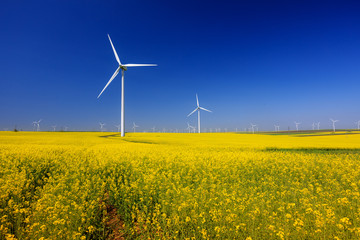 spring landscape with blue sky, yellow expanse with rapeseed flowers and the background wind turbines