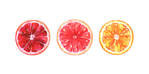 Hand painted watercolor illustration of slices of different oranges isolated on white background