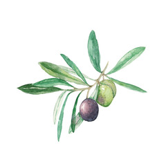 branch olives with fruits and leaves watercolor illustration