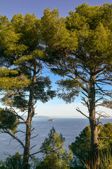 View of the Gallinara Island from Capo Mele cape with maritime pines in the foreground, Andora, Liguria, Italy