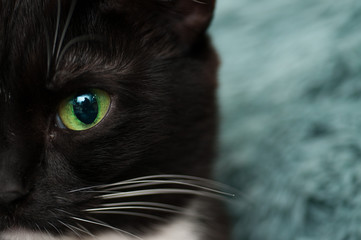 half of the muzzle and the eyes of a black cat in full face