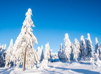 Winterwald im Erzgebirge