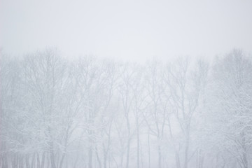 Fototapeta Showfall and Fog effect Beautiful Winter landscape scene background with snowfall Beauty winter backdrop Snowy forest Branches with snow Winter pattern or background.