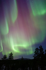 Aurora Borealis, Northern Lights,  above boreal forest in Finnish  Lapland.