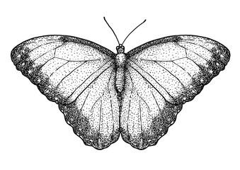 Quetzal illustration, drawing, engraving, ink, line art, vector